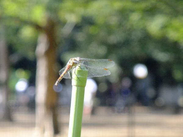 代々木公園16〔フリー写真〕