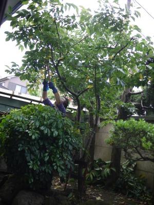 桜の木を切る馬鹿