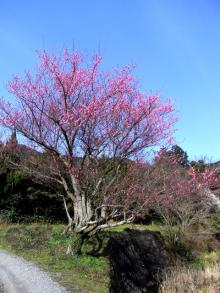 SAIのブログ-flower