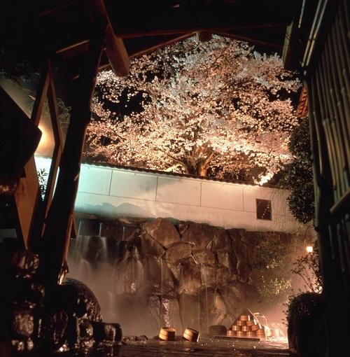 夜桜500×510