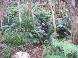 bush walk3