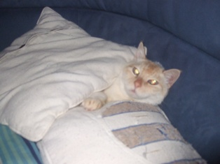 momo resting among chsions
