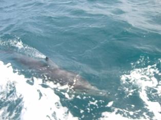 playful dolphinnes3