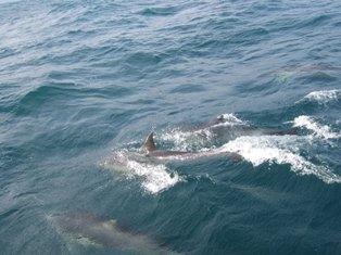 playful dolphinnes4