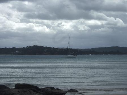 loon at anchorage