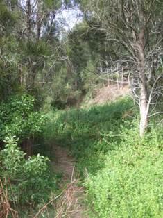track found