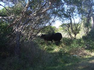 cows_20110602135633.jpg