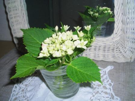 20120608玄関紫陽花