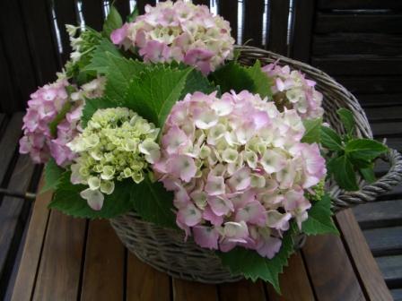 20120608紫陽花篭2