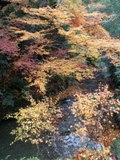 寂光院へ小川の紅葉