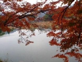 嵯峨野 大沢池から大覚寺