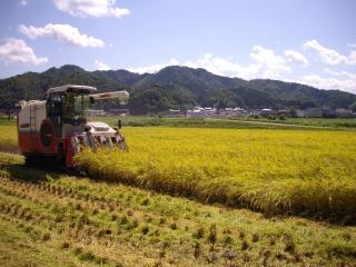 20120912田中農場稲刈