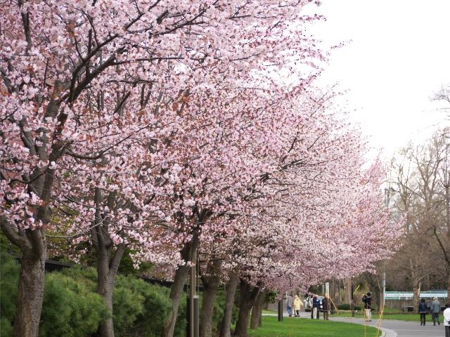 nakajima-park_07t.jpg