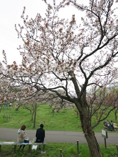 ume-blossom-hiraoka-park_11t.jpg.jpg