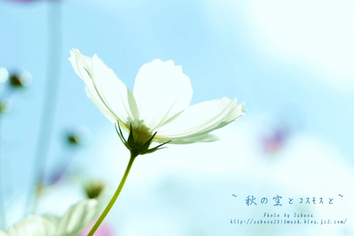 IMG_6100.jpg