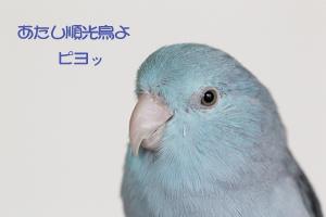 _51E9645-4.jpg