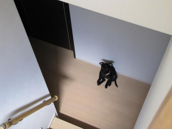 さくら階段
