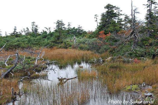 2008-1010-湿原1