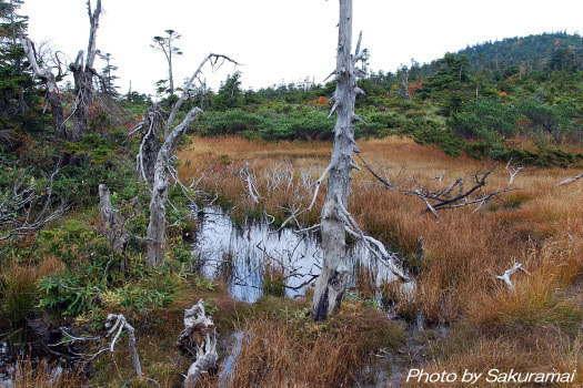2008-1010-湿原3