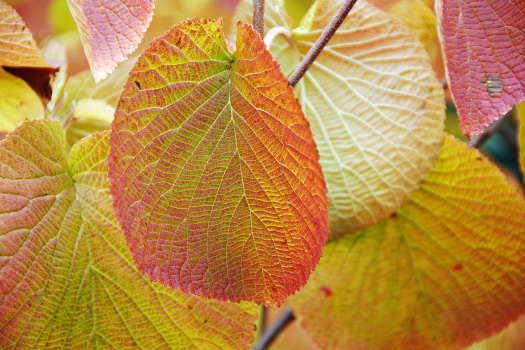 2008-1013-黄色い葉