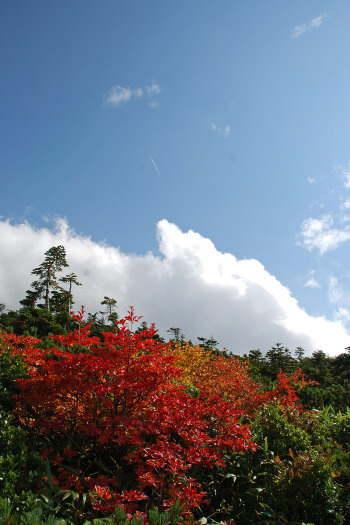 2008-1014-紅葉3