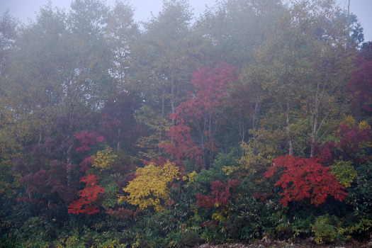2008-1016-霧の中の紅葉
