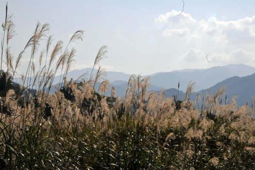 2008-1019-ススキと山