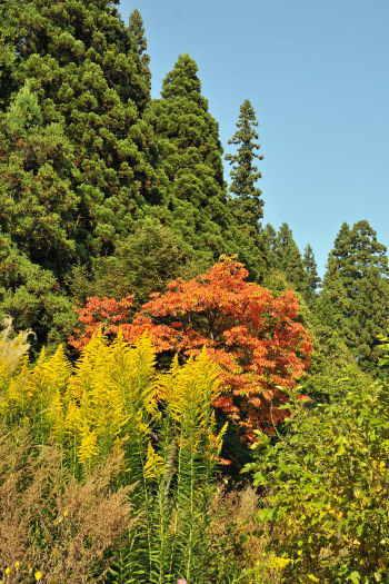 2008-1021-紅葉と黄色い花