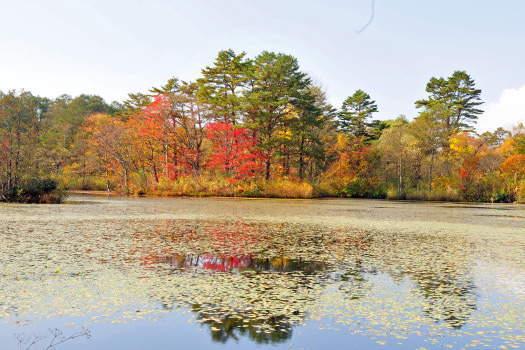 2008-1025-レンゲ沼