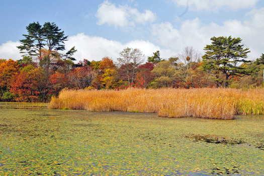2008-1025-レンゲ沼2