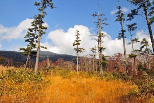 2008-1030-湿原