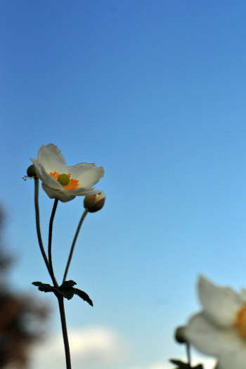 2008-1108-遠い花
