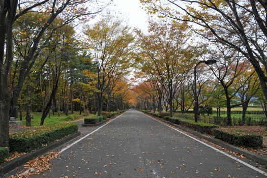2008-1112-公園の道
