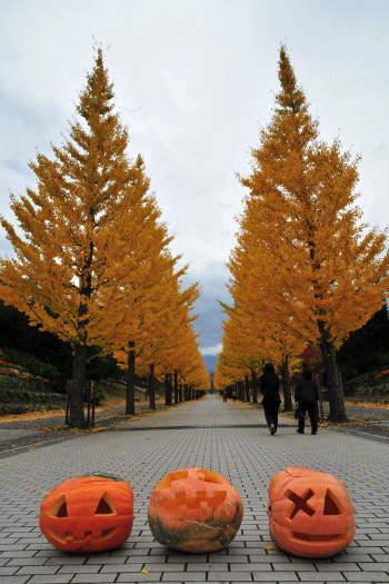 2008-1112-銀杏並木3