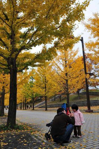 2008-1112-銀杏並木4