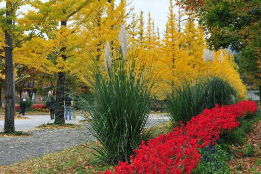 2008-1113-黄と赤1