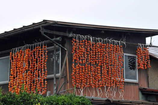 2008-1116-晩秋3