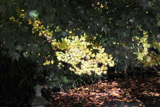 2008-1119-山寺5