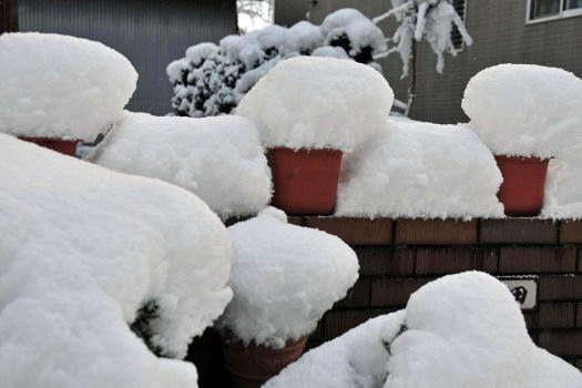 2008-1121-初雪
