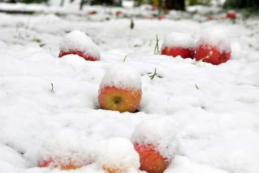2008-1126-リンゴ2