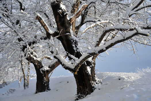 2008-1208-雪1
