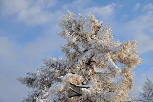 2008-1208-雪2