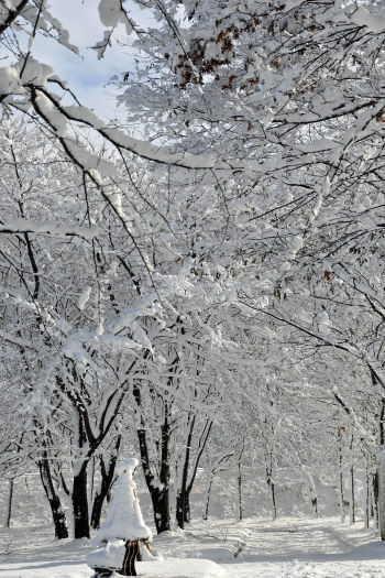 2008-1210-雪の公園1