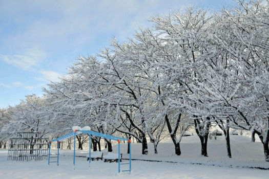 2008-1210-雪の公園2