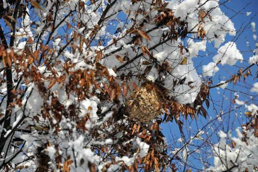 2008-1211-蜂の巣2