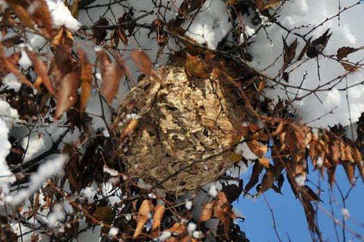 2008-1211-蜂の巣3