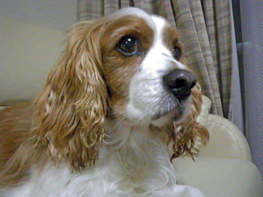 2009-0107-ワンコ2