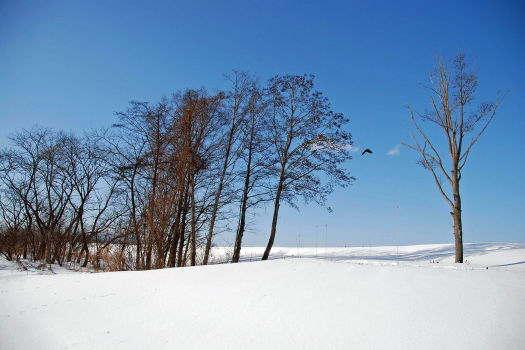 2009-0124-冬の空にカラス