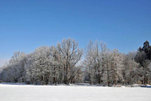 2009-0127-霧氷