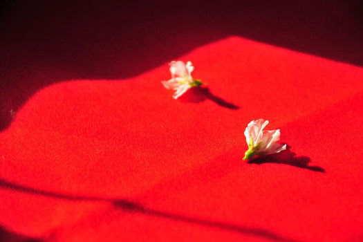 2009-0214-桜1
